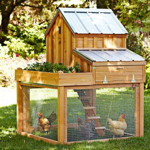 chicken-coop-house